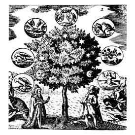 arbrephiloso